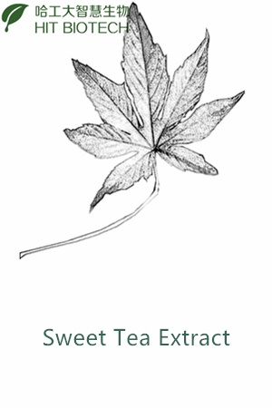 Sweet Tea Extract